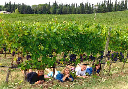 wine and vineyard_tour in Tuscany